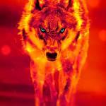 Wolf Thomas
